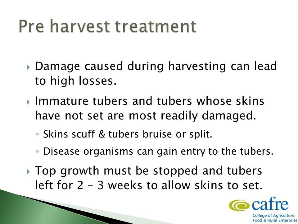  Damage caused during harvesting can lead to high losses.  Immature tubers and tubers whose skins have not set are most readily damaged. ◦ Skins scu