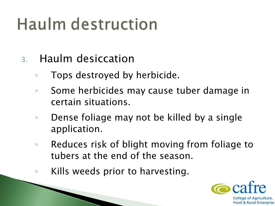 3. Haulm desiccation ◦ Tops destroyed by herbicide. ◦ Some herbicides may cause tuber damage in certain situations. ◦ Dense foliage may not be killed