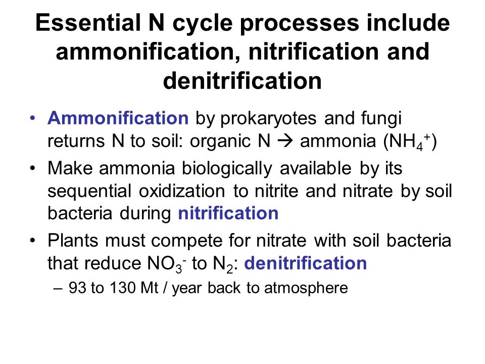 N fixation reduces N 2 to NH 4 + Soil N pool loses N to atmosphere but regains N through action of fixing bacteria N 2  NH 4 + does not happen spontaneously: highly endergonic = very energetically costly Where does the biologically available soil N come from.