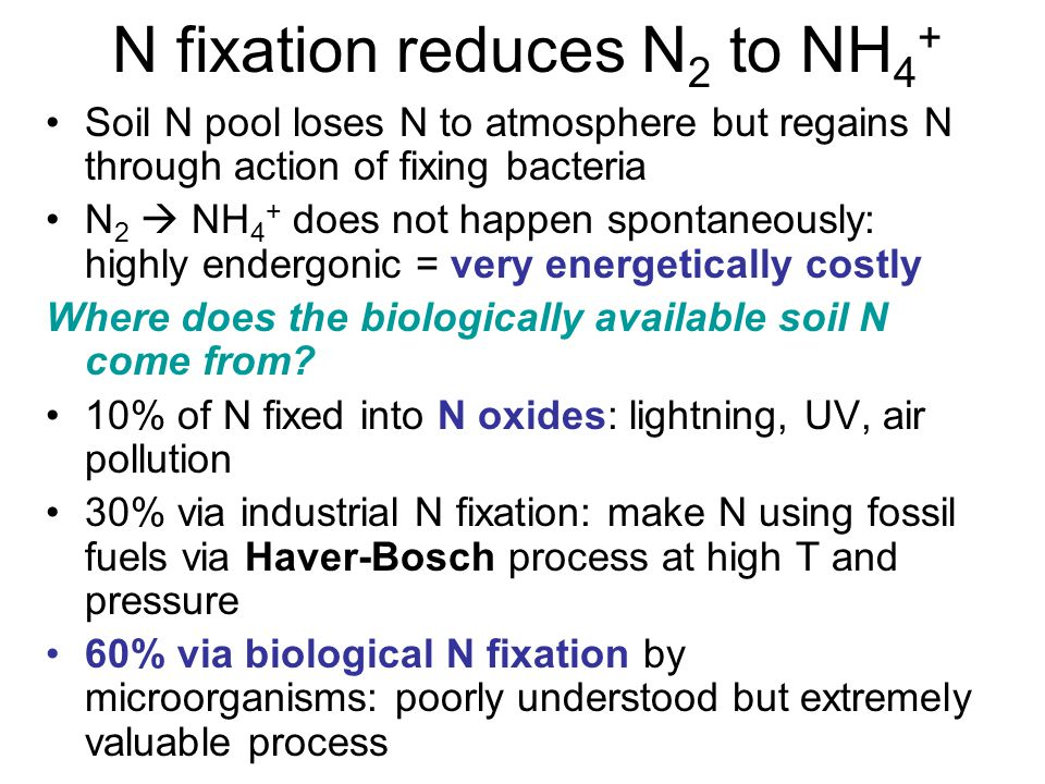N fixation reduces N 2 to NH 4 + Soil N pool loses N to atmosphere but regains N through action of fixing bacteria N 2  NH 4 + does not happen spontaneously: highly endergonic = very energetically costly Where does the biologically available soil N come from.