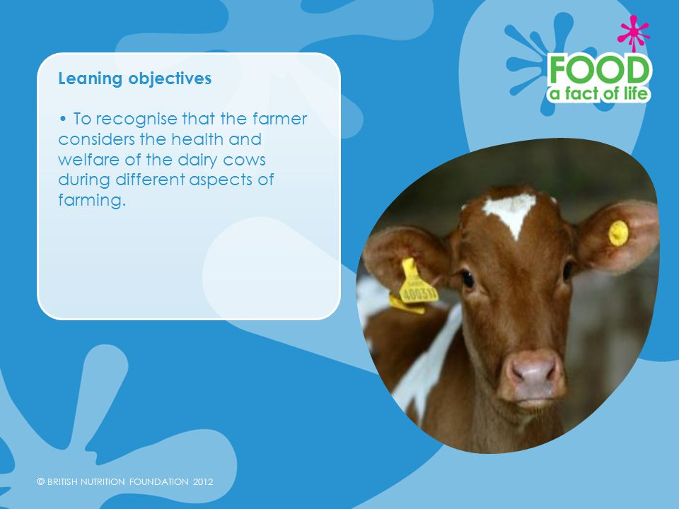 © BRITISH NUTRITION FOUNDATION 2012 Leaning objectives To recognise that the farmer considers the health and welfare of the dairy cows during different aspects of farming.