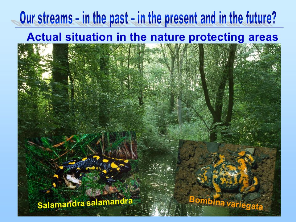 Actual situation in the nature protecting areas Bombina variegata Salamandra salamandra