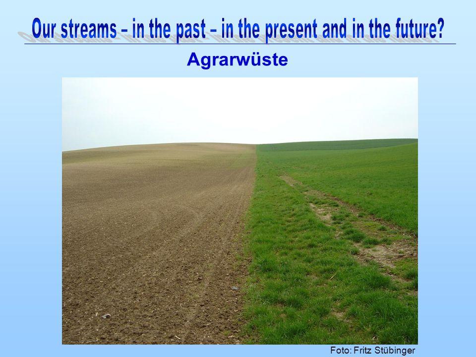 Agrarwüste Foto: Fritz Stübinger