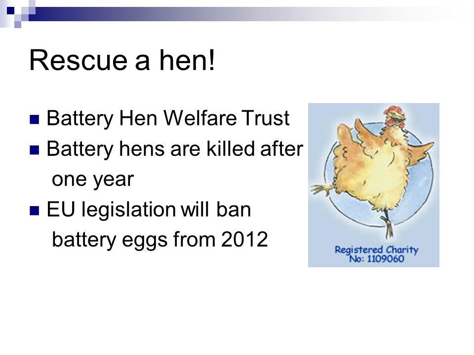 Rescue a hen.