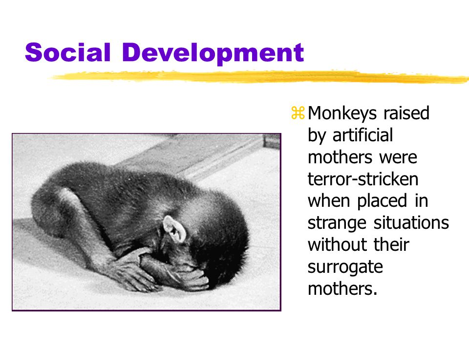 Social Development zMonkeys raised by artificial mothers were terror-stricken when placed in strange situations without their surrogate mothers.