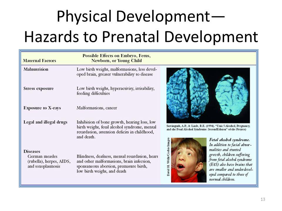 Physical Development— Hazards to Prenatal Development 13