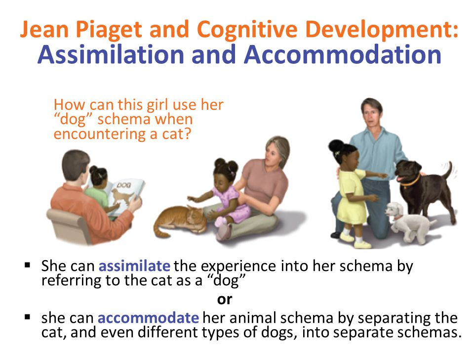 Jean Piaget and Cognitive Development: Assimilation and Accommodation How can this girl use her dog schema when encountering a cat.