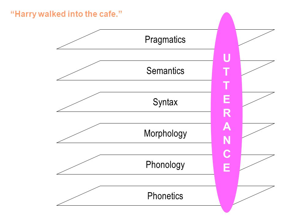 """Harry walked into the cafe."" Phonology Semantics Pragmatics Morphology Syntax Phonetics"