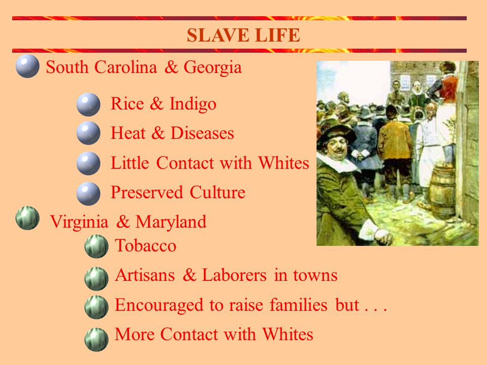 SLAVE LIFE Rice & Indigo Heat & Diseases Little Contact with Whites Preserved Culture Virginia & Maryland Tobacco Artisans & Laborers in towns Encouraged to raise families but...