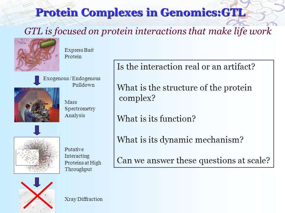 Protein Complexes in Genomics:GTL Express Bait Protein Exogenous / Endogenous Pulldown Mass Spectrometry Analysis Putative Interacting Proteins at High Throughput Is the interaction real or an artifact.