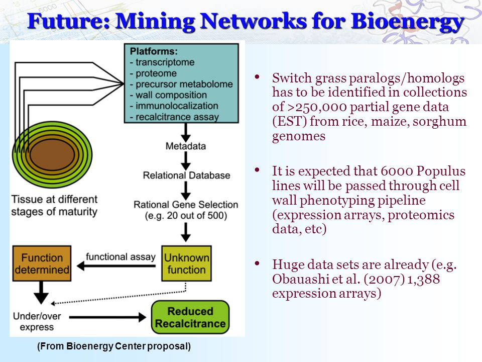 Future: Mining Networks for Bioenergy Switch grass paralogs/homologs has to be identified in collections of >250,000 partial gene data (EST) from rice, maize, sorghum genomes It is expected that 6000 Populus lines will be passed through cell wall phenotyping pipeline (expression arrays, proteomics data, etc) Huge data sets are already (e.g.