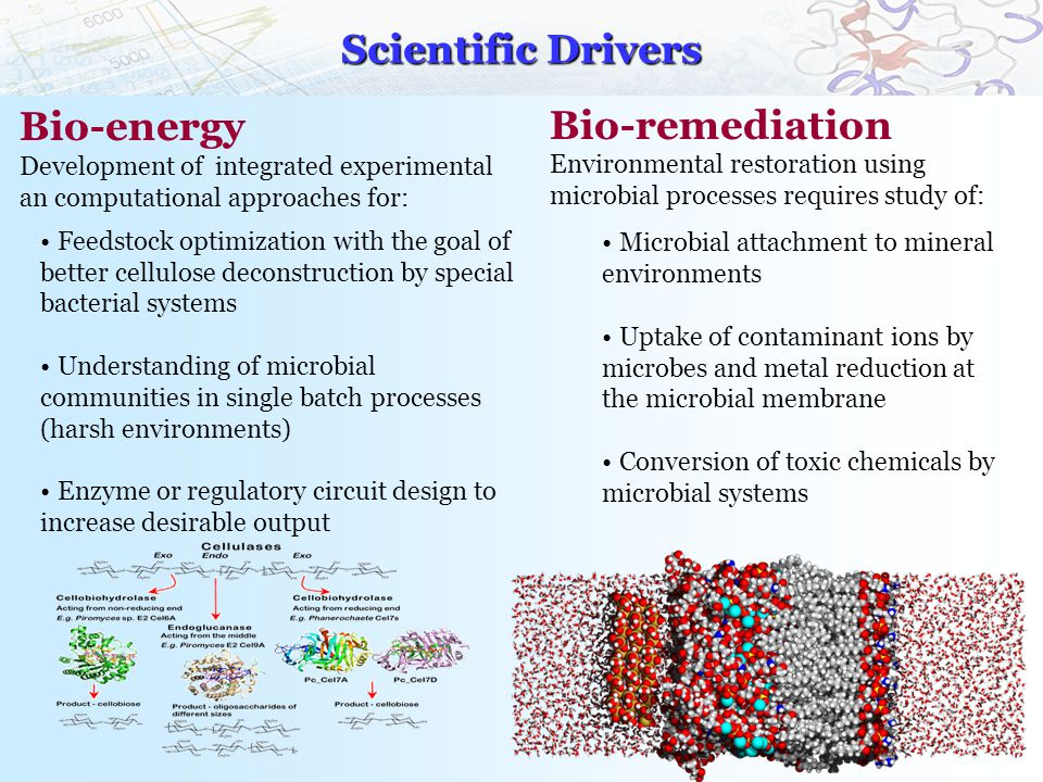 Scientific Drivers Bio-energy Development of integrated experimental an computational approaches for: Feedstock optimization with the goal of better cellulose deconstruction by special bacterial systems Understanding of microbial communities in single batch processes (harsh environments) Enzyme or regulatory circuit design to increase desirable output Bio-remediation Environmental restoration using microbial processes requires study of: Microbial attachment to mineral environments Uptake of contaminant ions by microbes and metal reduction at the microbial membrane Conversion of toxic chemicals by microbial systems