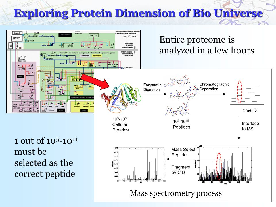 Mass spectrometry process Exploring Protein Dimension of Bio Universe 1 out of 10 5 -10 11 must be selected as the correct peptide Entire proteome is analyzed in a few hours