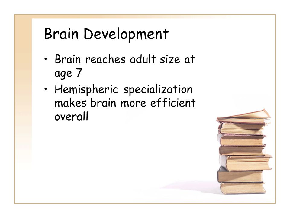 Brain Development Brain reaches adult size at age 7 Hemispheric specialization makes brain more efficient overall