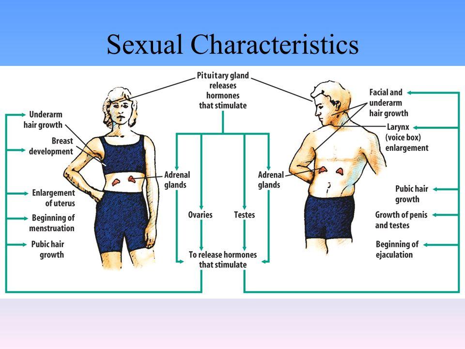 Sexual Characteristics