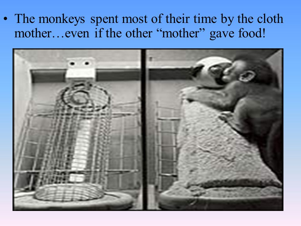 """The monkeys spent most of their time by the cloth mother…even if the other """"mother"""" gave food!"""