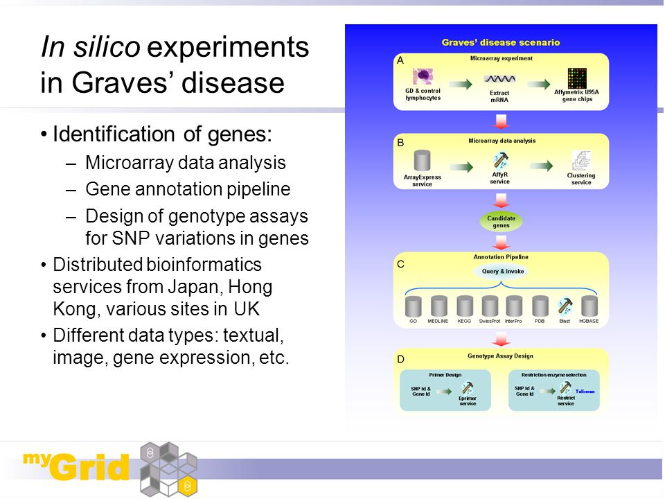 In silico experiments in Graves' disease Identification of genes: –Microarray data analysis –Gene annotation pipeline –Design of genotype assays for S