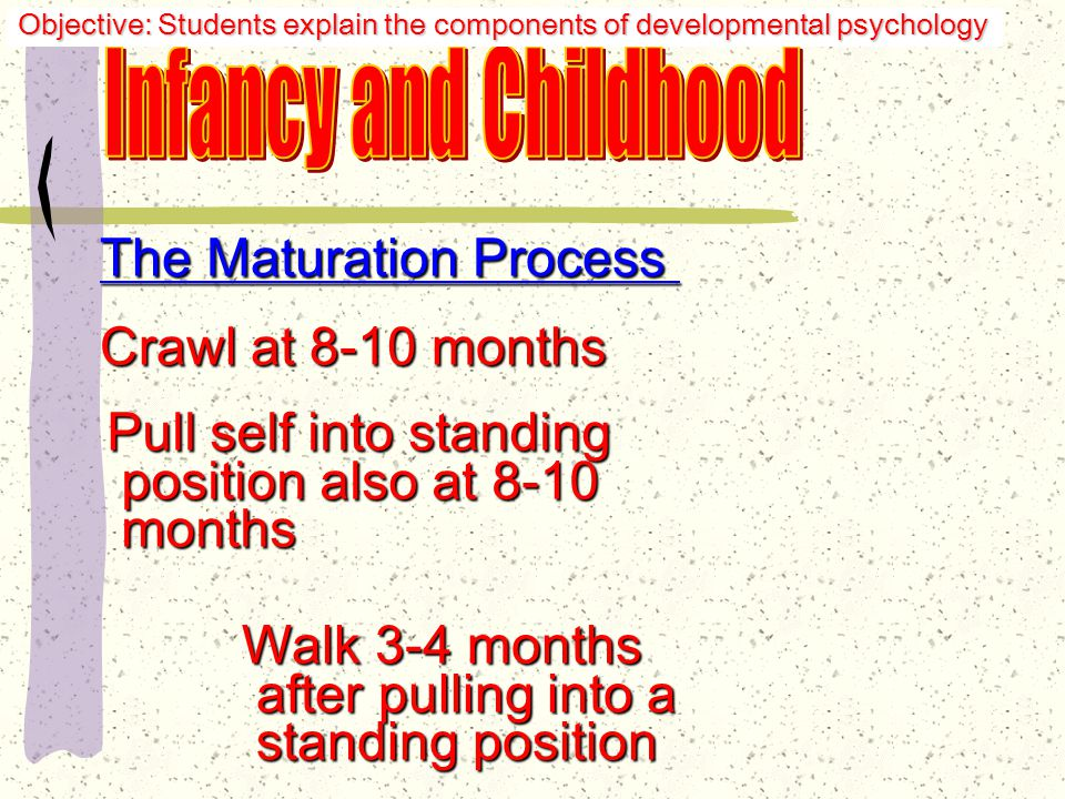 The Maturation Process The infant will generally: Lift head at 3 months Smile at 4 months Grasp objects at 5-6 months months Objective: Students explain the components of developmental psychology