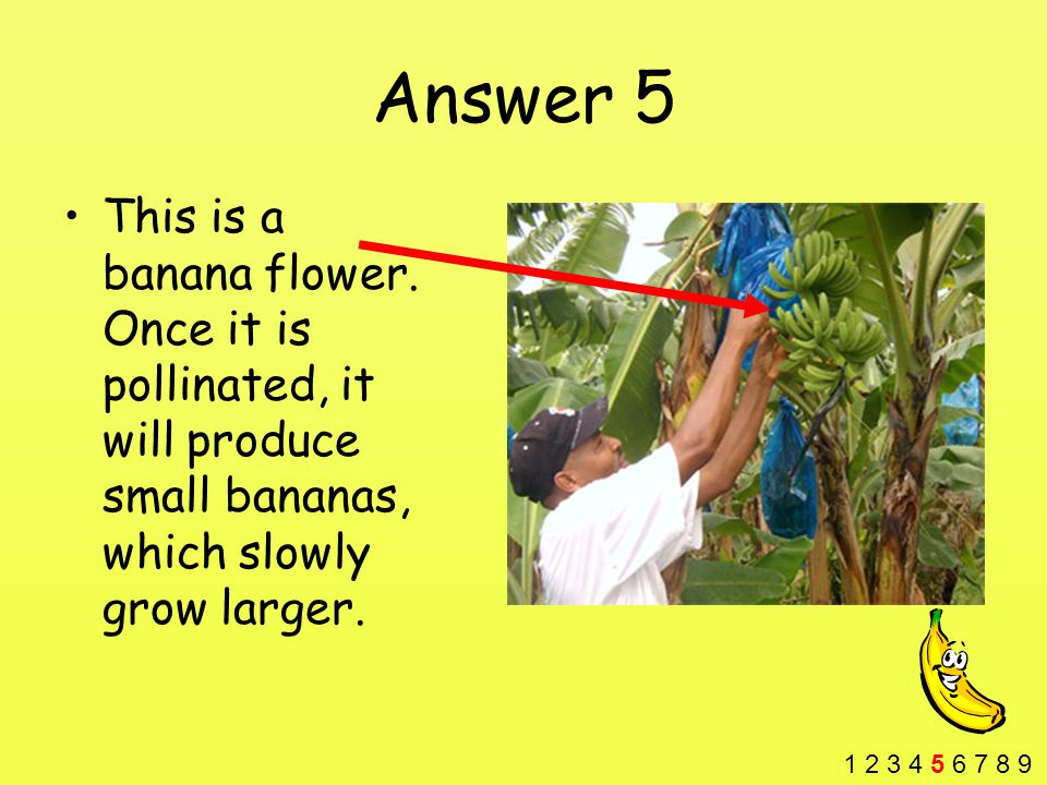 Answer 5 This is a banana flower.
