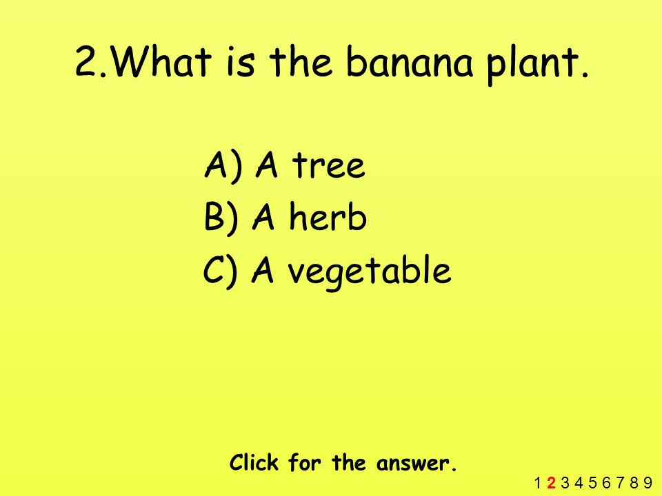 2.What is the banana plant. A) A tree B) A herb C) A vegetable Click for the answer.