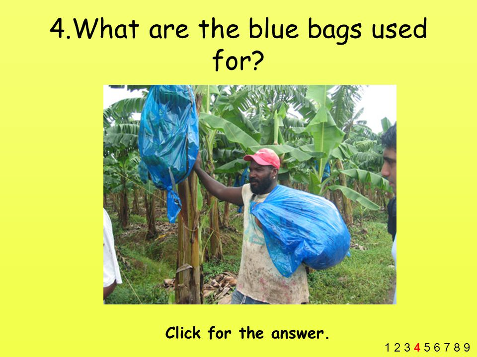 4.What are the blue bags used for? Click for the answer. 1 2 3 4 5 6 7 8 9