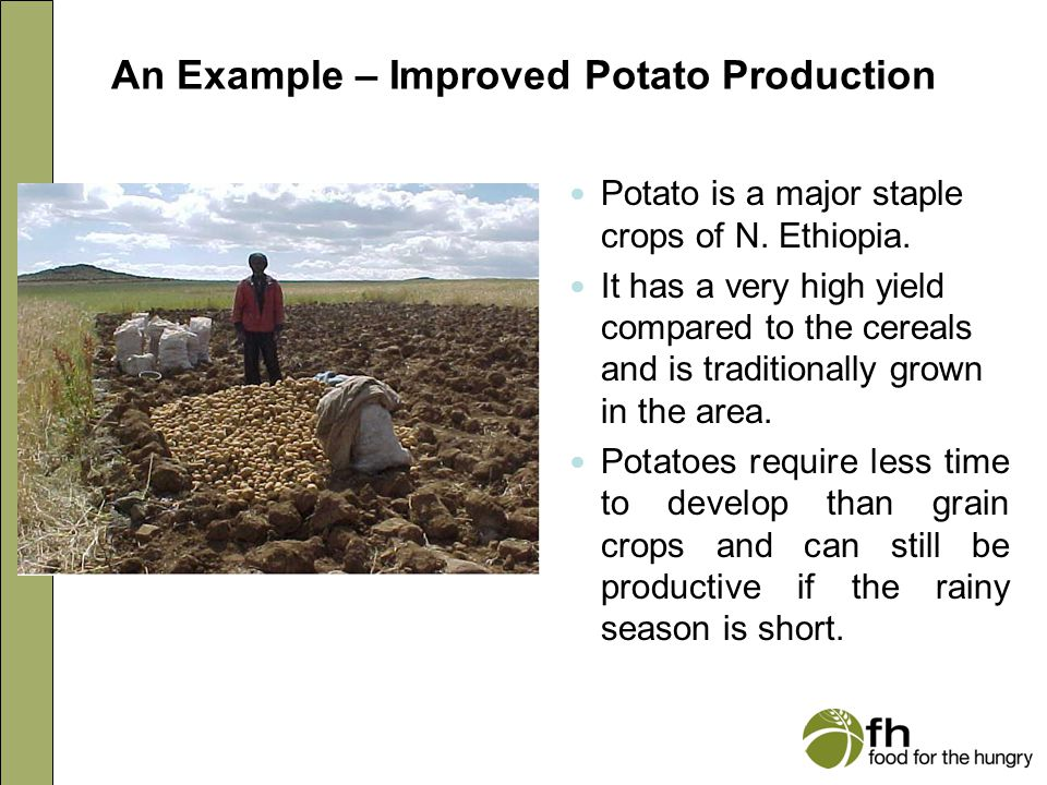 An Example – Improved Potato Production Potato is a major staple crops of N. Ethiopia. It has a very high yield compared to the cereals and is traditi