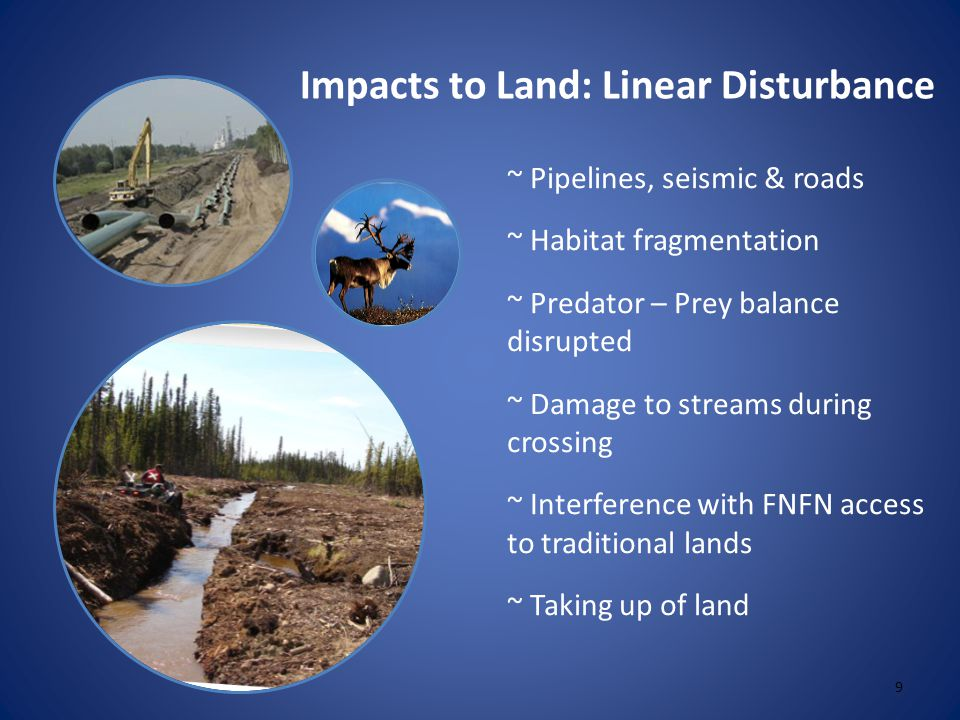 Impacts to Land: Linear Disturbance ~ Pipelines, seismic & roads ~ Habitat fragmentation ~ Predator – Prey balance disrupted ~ Damage to streams during crossing ~ Interference with FNFN access to traditional lands ~ Taking up of land 9