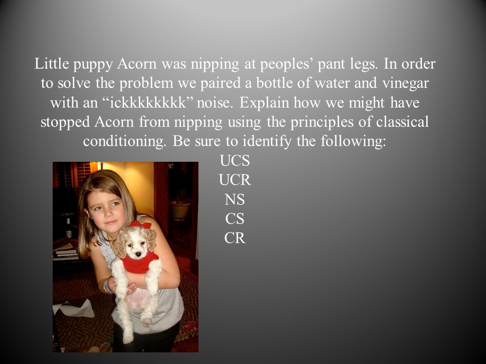 Little puppy Acorn was nipping at peoples' pant legs.