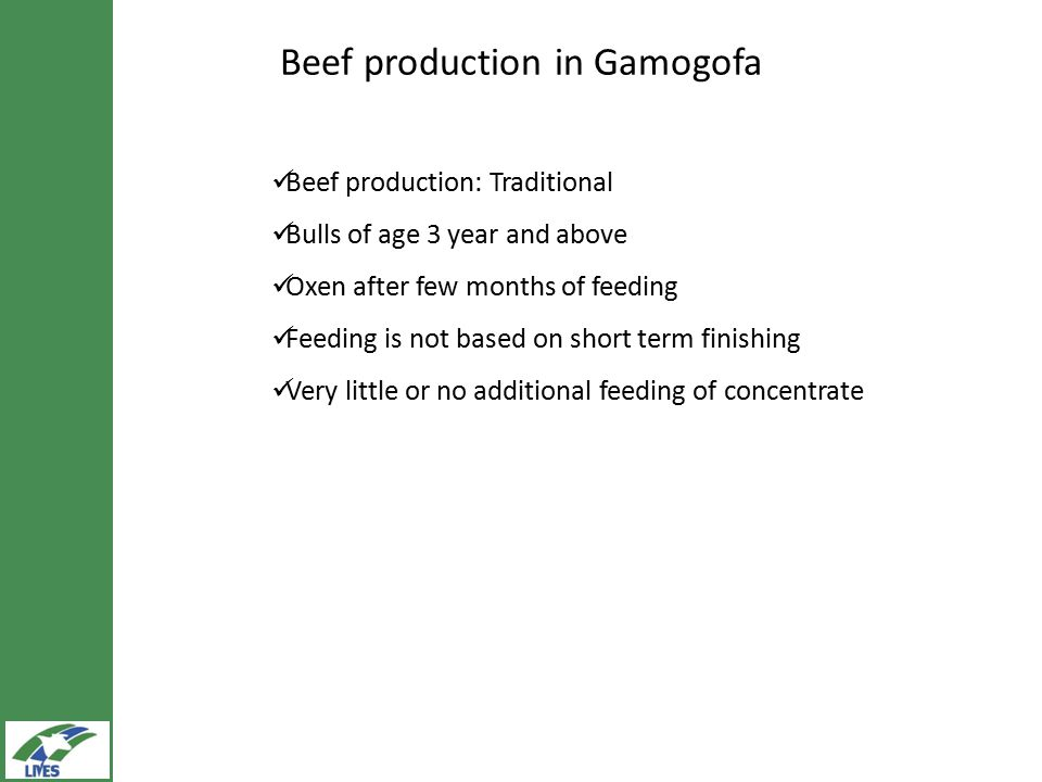 Beef production in Gamogofa Beef production: Traditional Bulls of age 3 year and above Oxen after few months of feeding Feeding is not based on short term finishing Very little or no additional feeding of concentrate