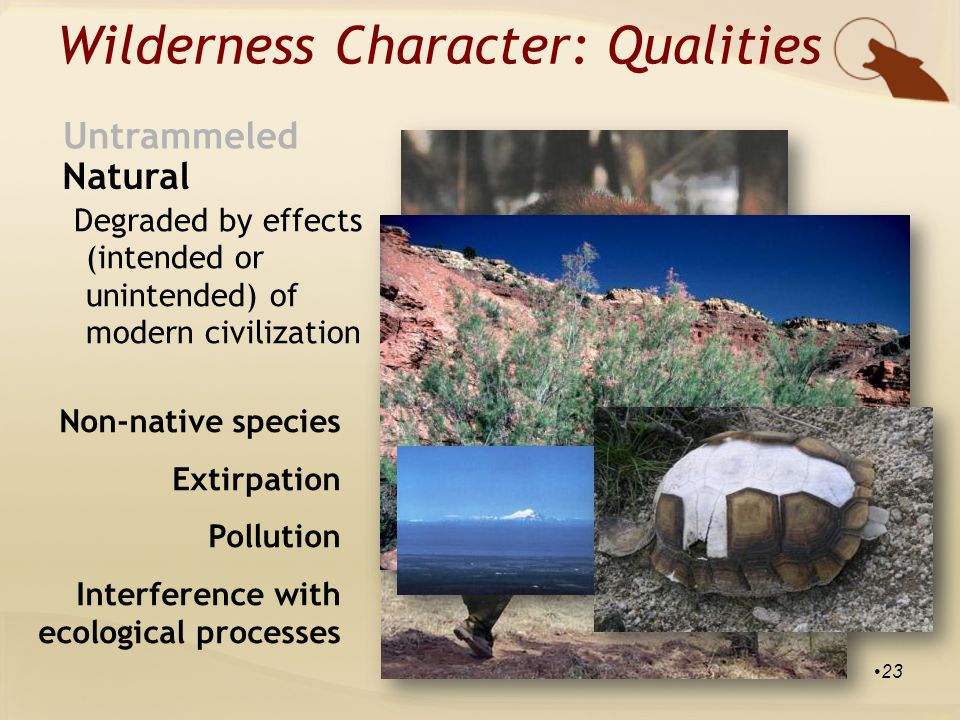 Natural Untrammeled Degraded by effects (intended or unintended) of modern civilization Wilderness Character: Qualities Non-native species Extirpation Pollution Interference with ecological processes 23