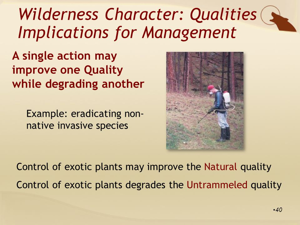 Example: eradicating non- native invasive species Control of exotic plants may improve the Natural quality Control of exotic plants degrades the Untrammeled quality Wilderness Character: Qualities Implications for Management A single action may improve one Quality while degrading another 40