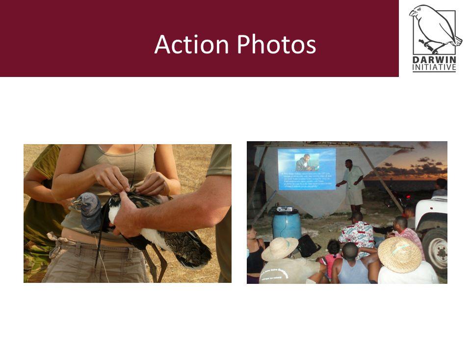 Action Photos