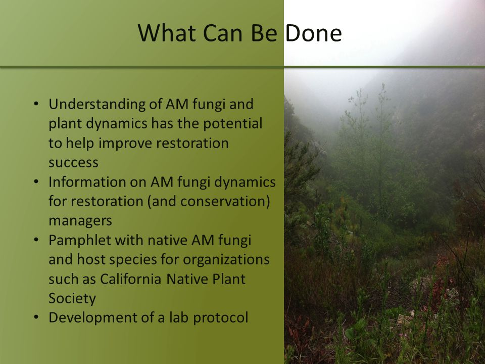 What Can Be Done Understanding of AM fungi and plant dynamics has the potential to help improve restoration success Information on AM fungi dynamics for restoration (and conservation) managers Pamphlet with native AM fungi and host species for organizations such as California Native Plant Society Development of a lab protocol