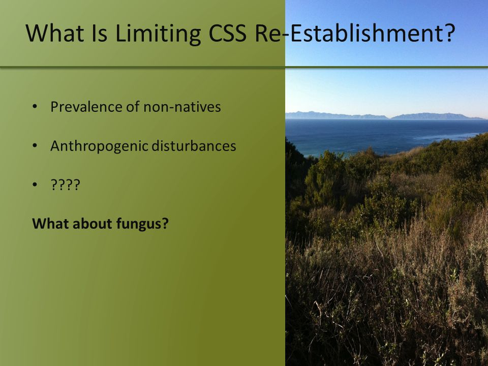 What Is Limiting CSS Re-Establishment. Prevalence of non-natives Anthropogenic disturbances .