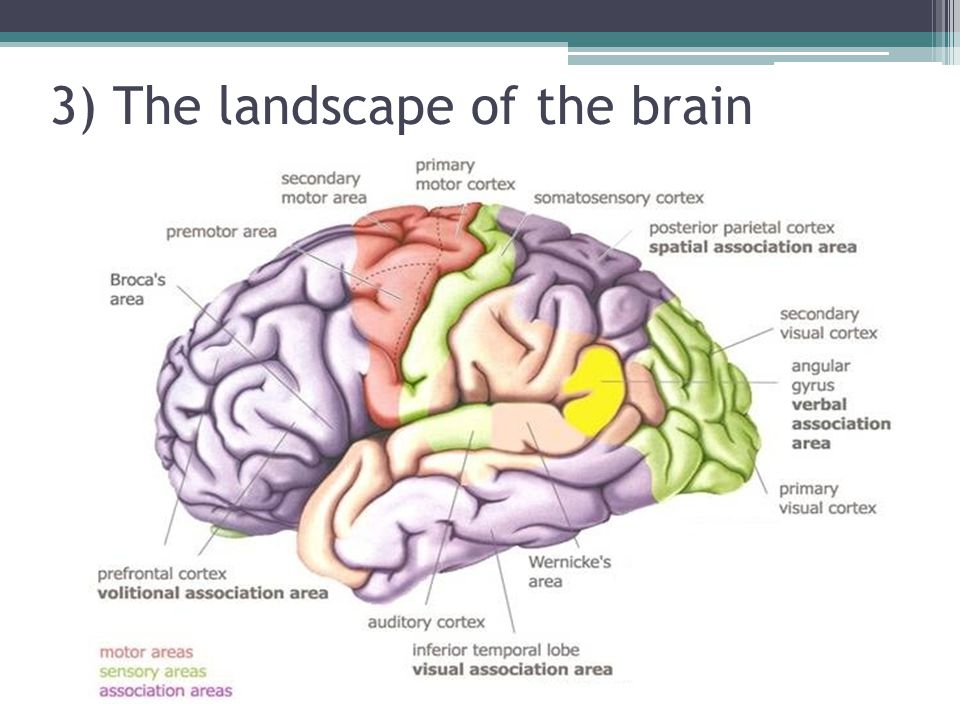 3) The landscape of the brain
