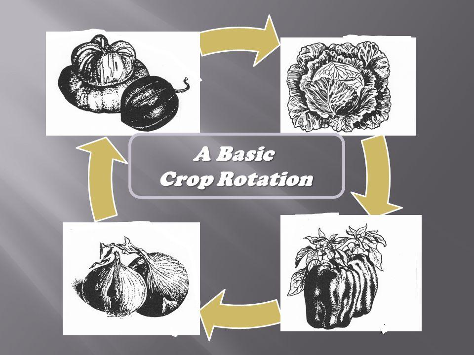 A Basic Crop Rotation
