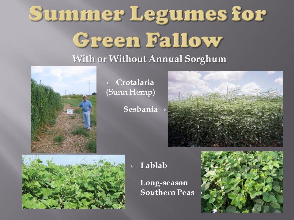 With or Without Annual Sorghum ← Crotalaria (Sunn Hemp) Sesbania→ ← Lablab Long-season Southern Peas→