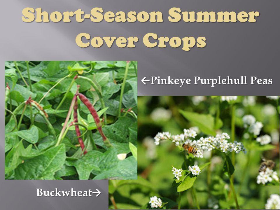 ← Pinkeye Purplehull Peas Buckwheat →