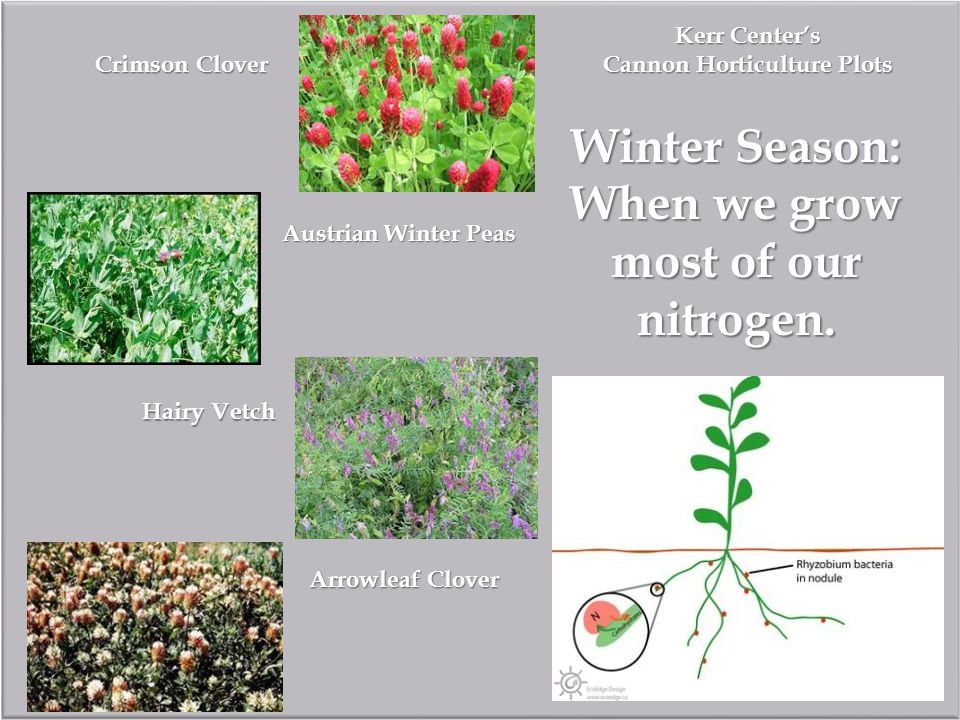 Kerr Center's Cannon Horticulture Plots Winter Season: When we grow most of our nitrogen.