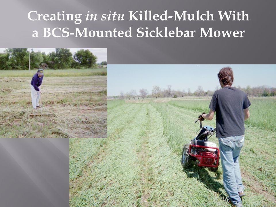 Creating in situ Killed - Mulch With a BCS-Mounted Sicklebar Mower