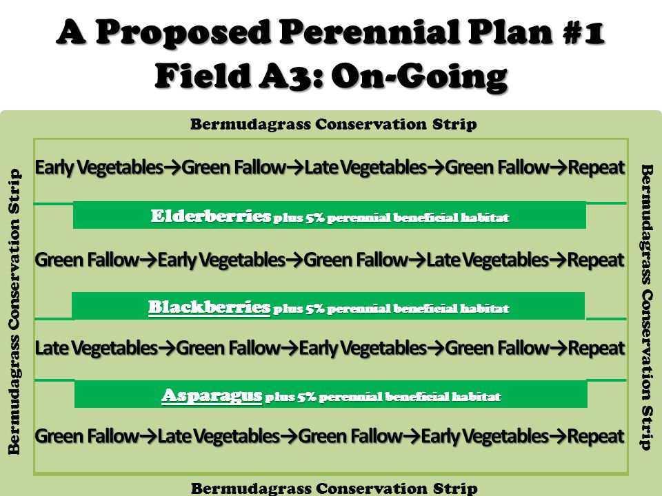 A Proposed Perennial Plan #1 Field A3: On-Going Blackberries plus 5% perennial beneficial habitat Early Vegetables→Green Fallow→Late Vegetables→Green Fallow→Repeat Elderberries plus 5% perennial beneficial habitat Asparagus plus 5% perennial beneficial habitat Bermudagrass Conservation Strip Green Fallow→Early Vegetables→Green Fallow→Late Vegetables→Repeat Late Vegetables→Green Fallow→Early Vegetables→Green Fallow→Repeat Green Fallow→Late Vegetables→Green Fallow→Early Vegetables→Repeat