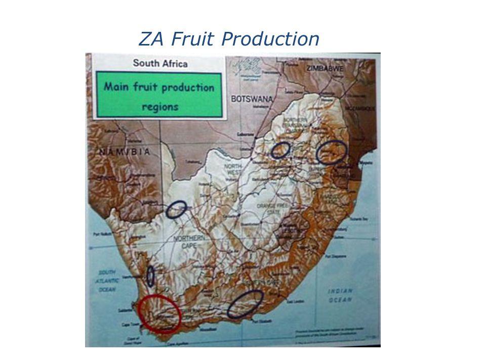 ZA Fruit Production