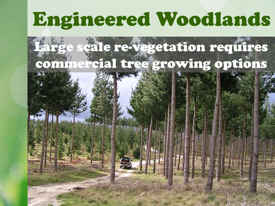 Engineered Woodlands Large scale re-vegetation requires commercial tree growing options