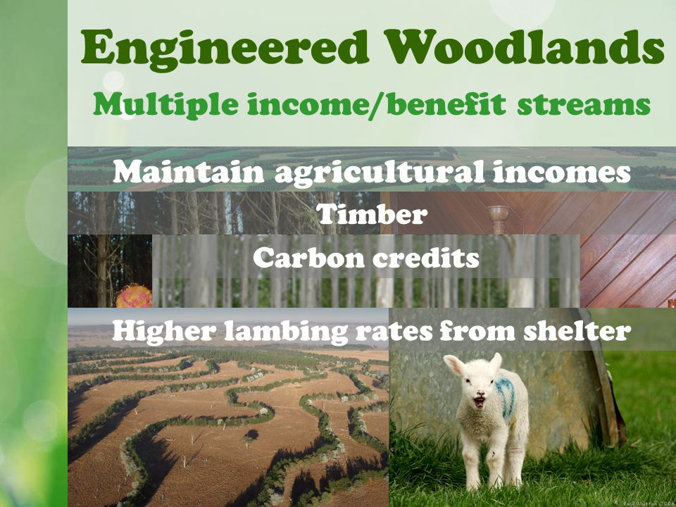 Maintain agricultural incomes Engineered Woodlands Multiple income/benefit streams Timber Carbon credits Higher lambing rates from shelter
