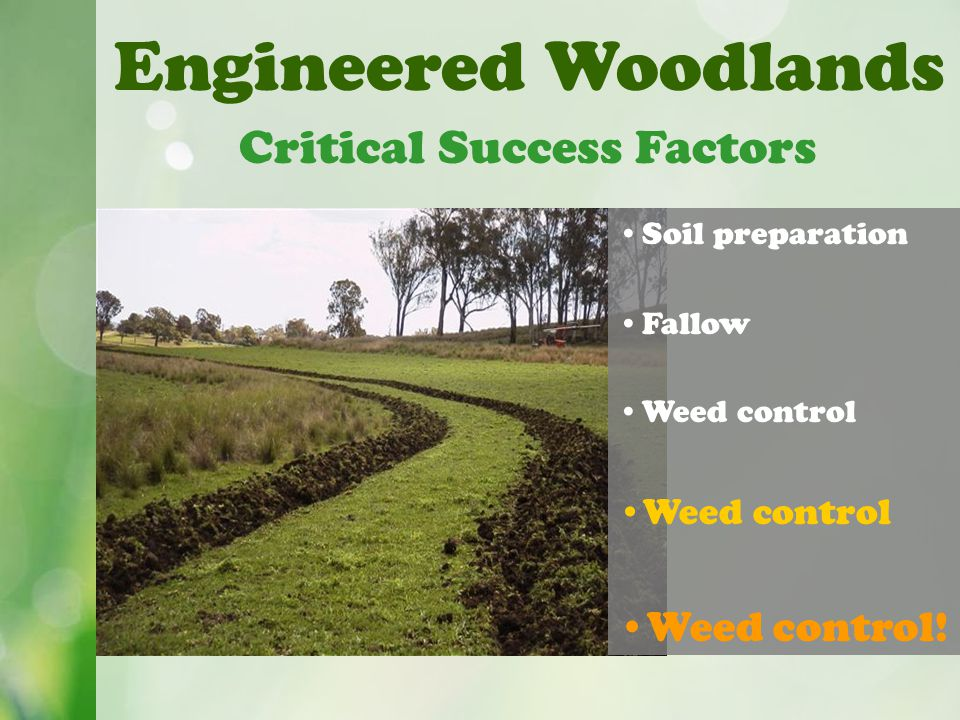 Engineered Woodlands Critical Success Factors Soil preparation Fallow Weed control Weed control!