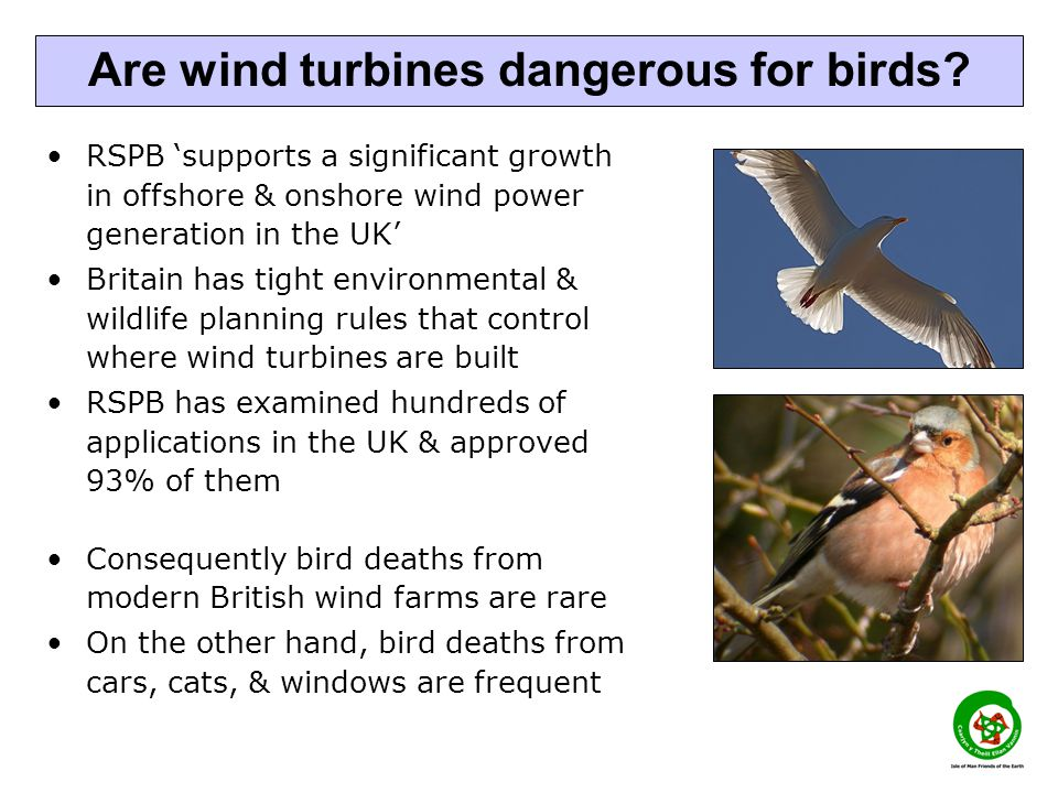 RSPB 'supports a significant growth in offshore & onshore wind power generation in the UK' Britain has tight environmental & wildlife planning rules that control where wind turbines are built RSPB has examined hundreds of applications in the UK & approved 93% of them Consequently bird deaths from modern British wind farms are rare On the other hand, bird deaths from cars, cats, & windows are frequent Are wind turbines dangerous for birds