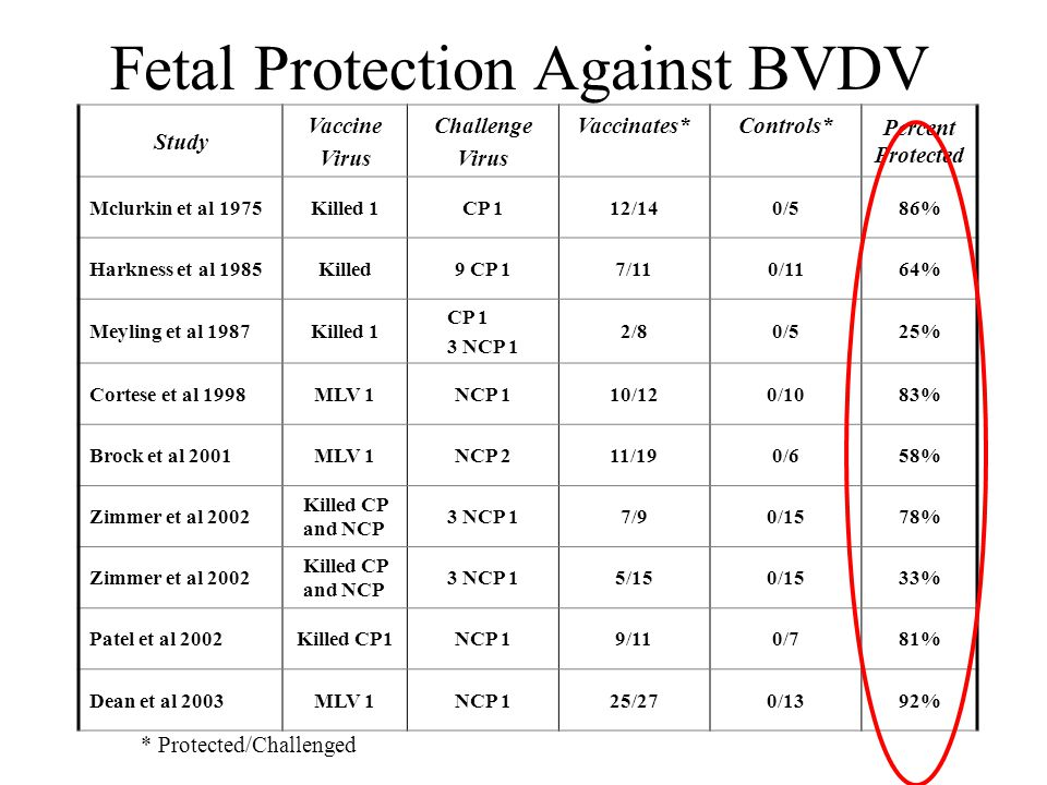 Fetal Protection Against BVDV Study Vaccine Virus Challenge Virus Vaccinates* Controls* Percent Protected Mclurkin et al 1975Killed 1CP 112/140/586% Harkness et al 1985Killed9 CP 17/110/1164% Meyling et al 1987Killed 1 CP 1 3 NCP 1 2/80/525% Cortese et al 1998MLV 1NCP 110/120/1083% Brock et al 2001MLV 1NCP 211/190/658% Zimmer et al 2002 Killed CP and NCP 3 NCP 17/90/1578% Zimmer et al 2002 Killed CP and NCP 3 NCP 15/150/1533% Patel et al 2002Killed CP1NCP 19/110/781% Dean et al 2003MLV 1NCP 125/270/1392% * Protected/Challenged