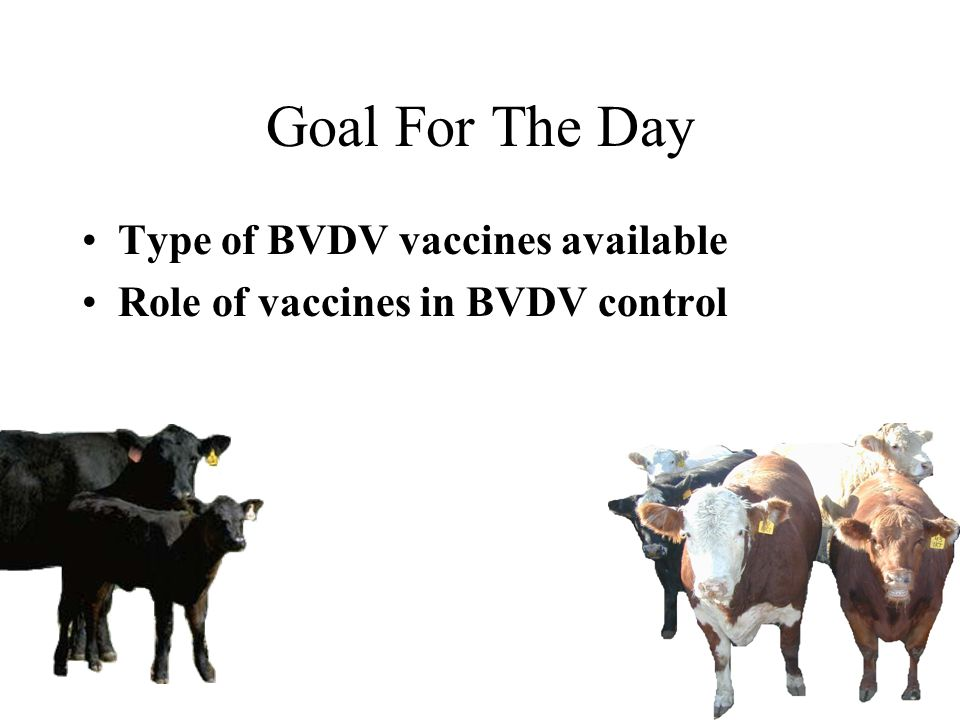 Goal For The Day Type of BVDV vaccines available Role of vaccines in BVDV control