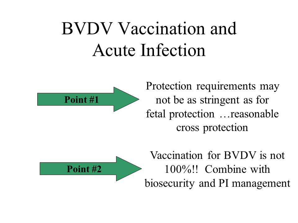 BVDV Vaccination and Acute Infection Point #1 Protection requirements may not be as stringent as for fetal protection …reasonable cross protection Point #2 Vaccination for BVDV is not 100%!.