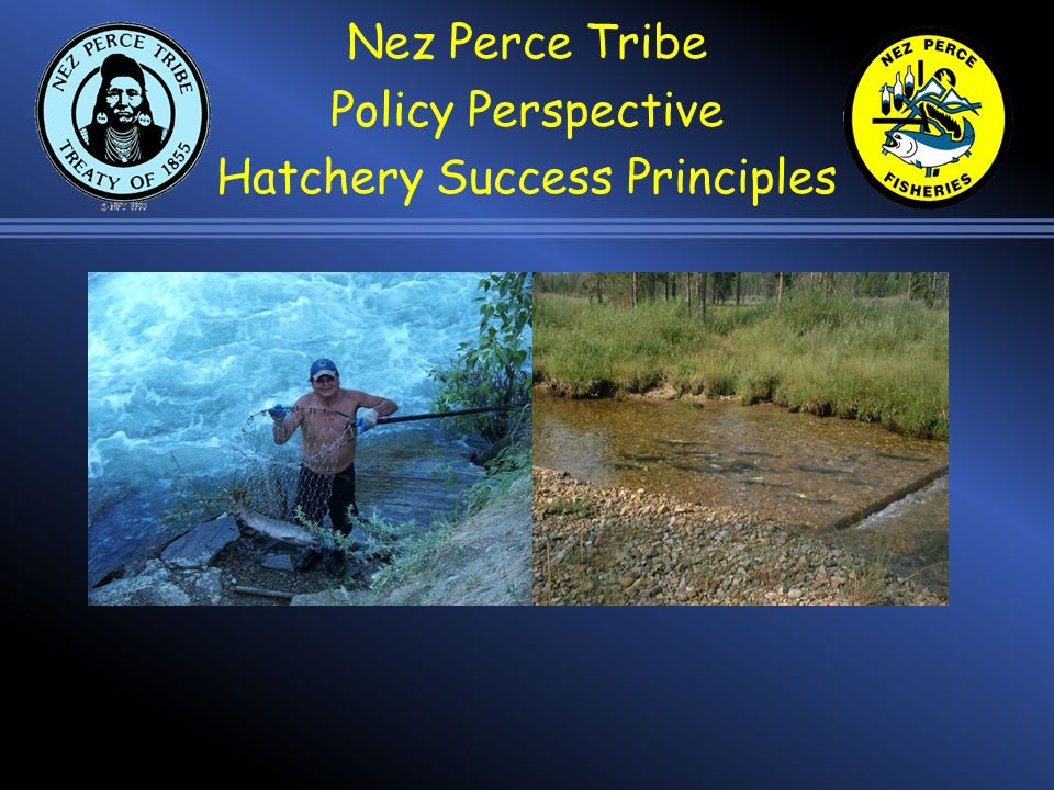 Tribal way of life and the treaty rights guaranteeing that are reliant on healthy and harvestable fish populations.